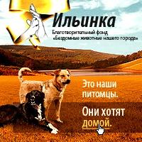 Приют для бездомных собак Ильинка